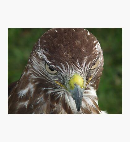 Evil look Eagle Photographic Print