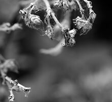 Dead Flower by SunDwn