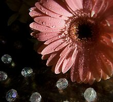 Antiqueed Daisy by Sami Mick