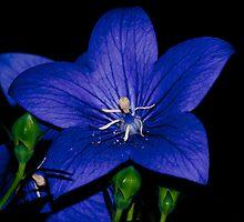 backyard bloom by BenLeSauvage