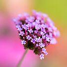 Summer Beauty by Ellesscee