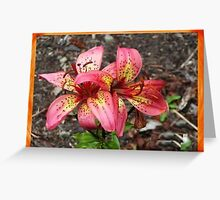 Colorful Lilies Greeting Card