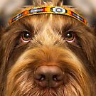 Brown Roan Italian Spinone Dog Head Shot by heidiannemorris