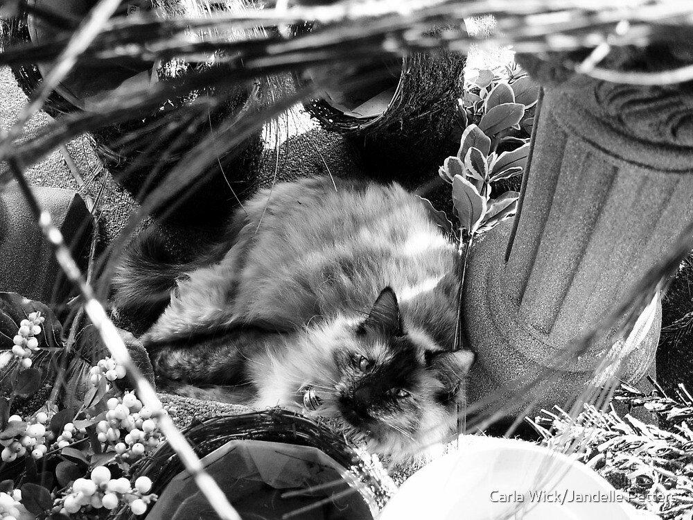 Small Town Pets 2 by Carla Wick/Jandelle Petters