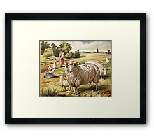 Vinage Picture of Sheep Framed Print