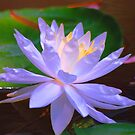 Waterlily X by Meeli Sonn