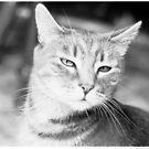 Calvin Cat by EvansKelly