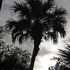 Palm Silhouette by Scott Ruhs