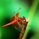 Dragonfly by loiteke