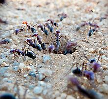 Ant's Eye view by Julie Sleeman