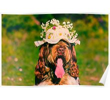 Brown Roan Italian Spinone Dog Head Shot Poster