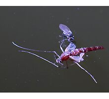 Carnage in the pond (2483) Photographic Print