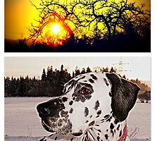 Julius in the winter sunset by ©The Creative  Minds