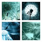 Dandelions Art pictures from Germany by Falko Follert