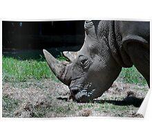 Rhino Graze Poster