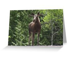 Bull Moose Greeting Card