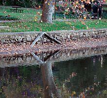 Reflection by Jarmat