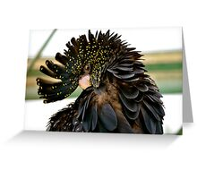 Red-tailed Black Cockatoo Greeting Card