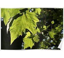 Leaf Glow Poster