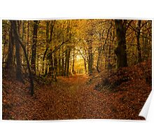 Forrest in Fall Poster