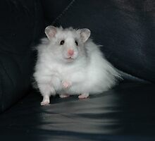 Hamster by Nynkje