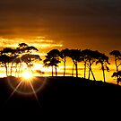 Sunrays in the Scots Pines by Fraser Ross