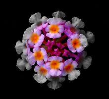 Flower paradise by Akshay Hegde