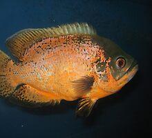Piranha Fish by indus2012
