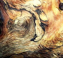 Natural Wooden Elephant by Vanessa Barklay