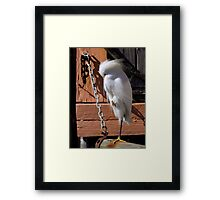 Avian Discretion Framed Print