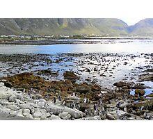 Penguin beach Photographic Print