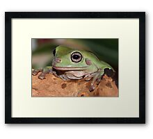 Introducing Boris Framed Print