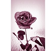 Red Painted Rose Photographic Print