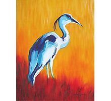Watchful and Patient Blue Heron Photographic Print