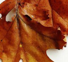 October Leaves Sticker