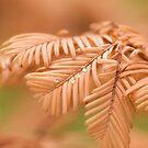 Autumn Fern by Ellesscee