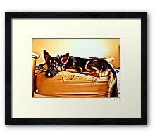 German Shepherd. Framed Print