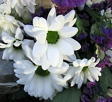 Beautiful White Dahlias - Symbol of Peace and Purity by MidnightMelody