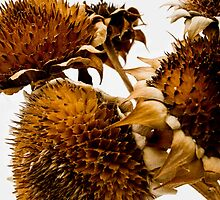 Sunflowers in winter by Harv Churchill