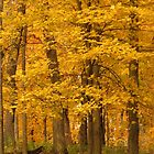 The Golden Woodland by lorilee