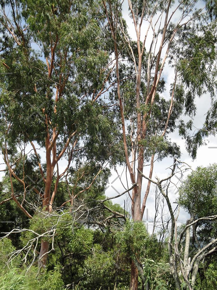 Trees Near Ravenshoe 2 by STHogan
