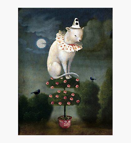 Harlekin Cat Photographic Print