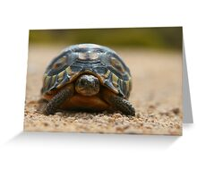 Slow Traffic Keep Right / Angulate Tortoise Greeting Card