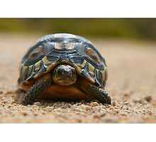 Slow Traffic Keep Right / Angulate Tortoise Photographic Print
