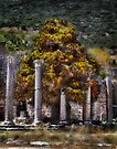 A Tree Grows In Ephesus by Ted Byrne