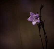 Simplicity by Pam Hogg