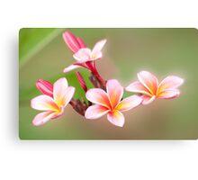 Tropical Pink - frangapani flower Canvas Print