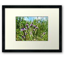 In the brush Framed Print