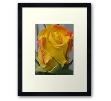 Yellow with Red Highlights Framed Print
