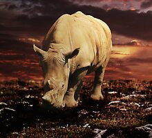 Evening Grazing by Carol Bleasdale